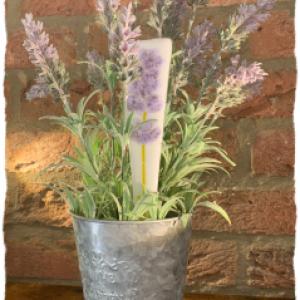 plant stake
